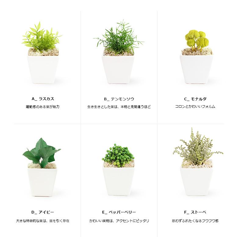プリザーブドグリーン/誕生日 プレゼント 女性 枯れない観葉植物 造花 ミニ お返し