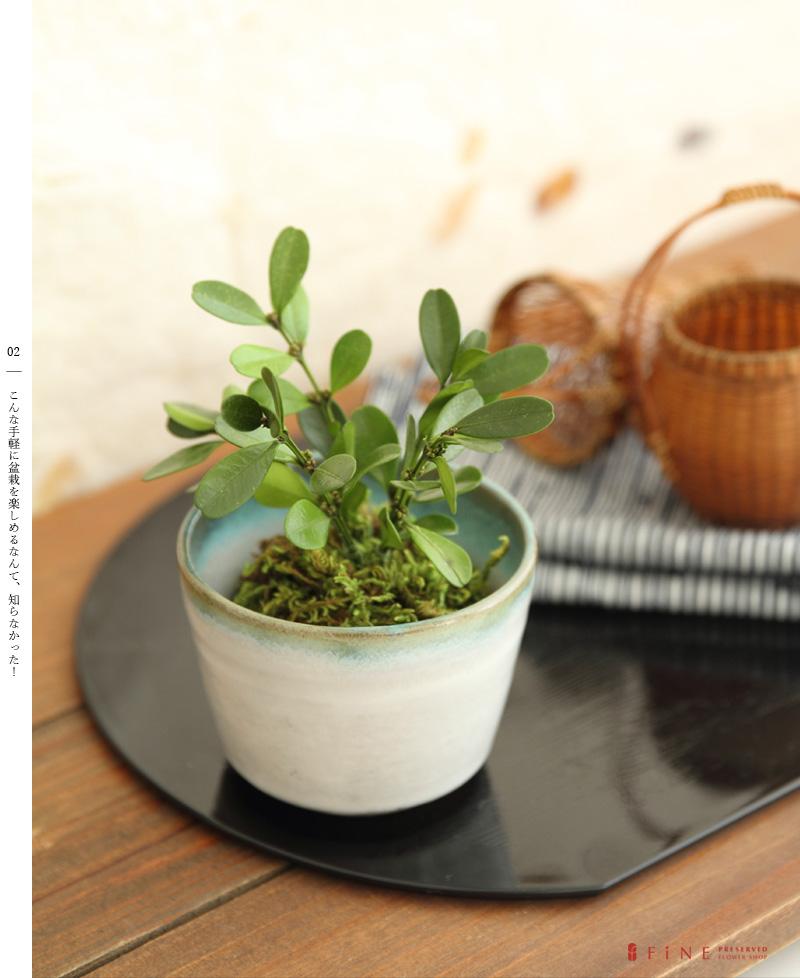 ギフト 観葉植物 ミニ インテリア プリザーブドグリーン 盆栽 和風 誕生日 プレゼント