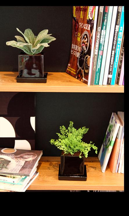 観葉植物 ミニ ギフト プリザーブドグリーン 新築祝い 引越し祝い お返し 内祝い 誕生日 プレゼント ミニ観葉植物 インテリア