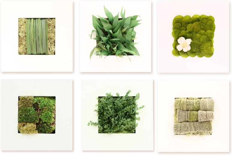 開店祝い 観葉植物