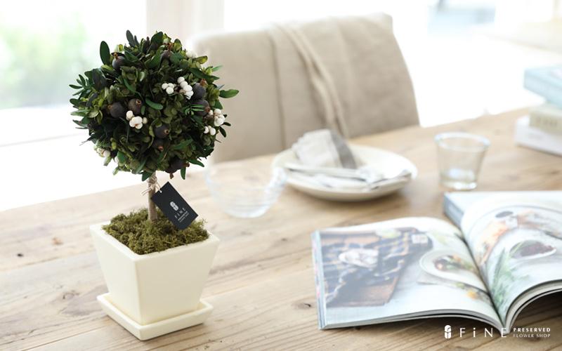 プリザーブドフラワー ギフト オリーブの木 オリーブ インテリアクリーン 幸せの木 お祝い 誕生日 インテリア