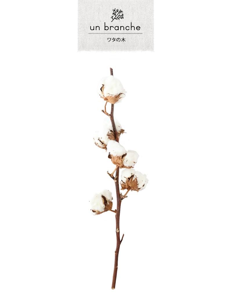 アンブランシュ コットンフラワー プリザーブドフラワー ドライフラワー 花材