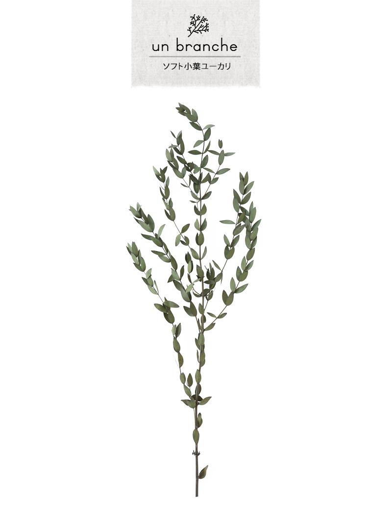 アンブランシュ プリザーブドフラワー ドライフラワー 花材